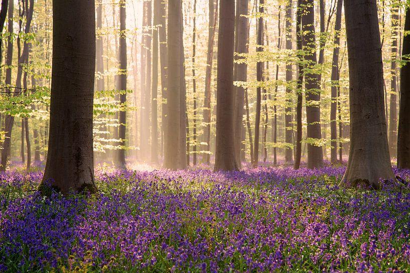 Misty sunrise in the wood van Elena Jongman
