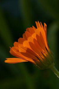 Oranje bloem van Nicolette Verdugt