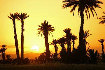 zonsondergang met palmen van wil spijker