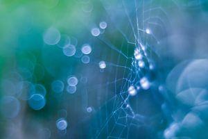 """""""web und dew"""" von Richard Lotte"""