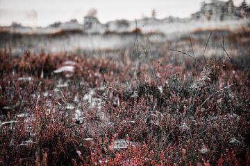 Rode heide in dauw van Micha Papenhuijzen