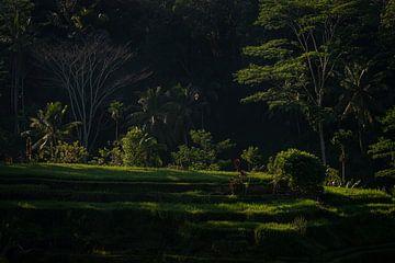 Verträumtes Tegalalang-Reisfeld in Bali von Ellis Peeters