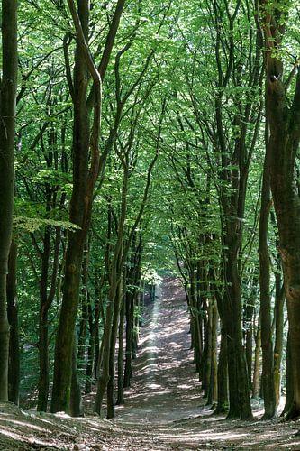 Abstieg in den Wald.