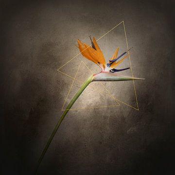 Sierlijke bloem - De Strelitzie | Vintage stijl goud van Melanie Viola