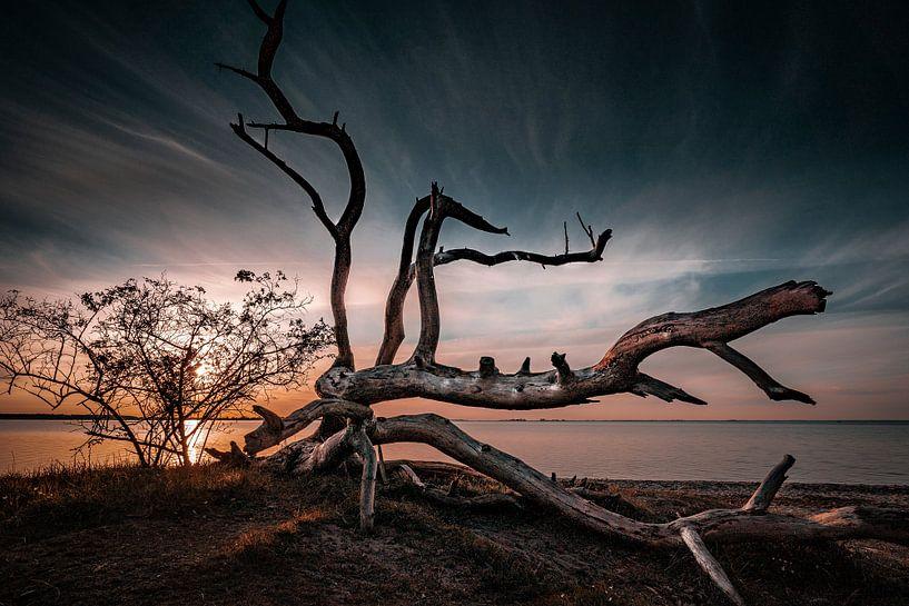 Schlafende Bäume von Sebastian Witt