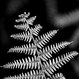Varen in zwart-wit van Dick Vermeij