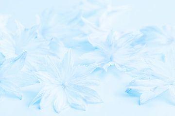 zacht lichtblauw