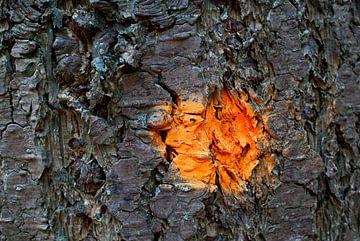 Oranje von Aart van Wijk