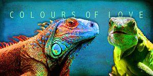 Colours of Love   |   Regenbogenfarben von Dirk H. Wendt
