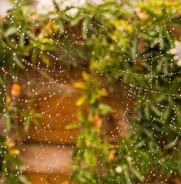 Natgeregend spinnenweb van Rinke Velds