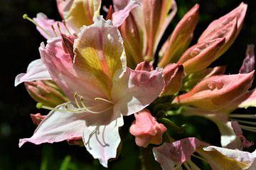 Bloemen in lente van Lisanne Rodenburg