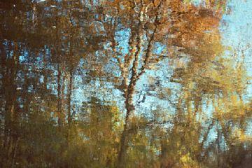 Herbstlicher Wald von Diana Mets