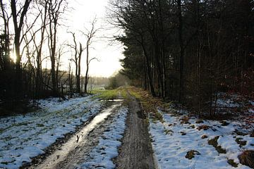 Wilde bos weggetjes  von jorrit Verduijn
