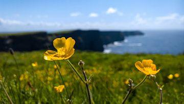 Cliffs of Moher sur rosstek ®