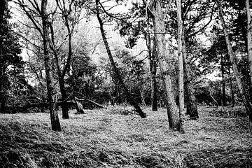 Grove bomstammen groeien uit het golvende gras van MICHEL WETTSTEIN