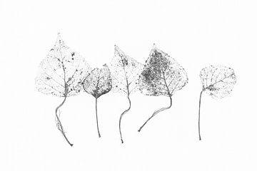 Graphic Botanical Japandi 2 van Alie Ekkelenkamp