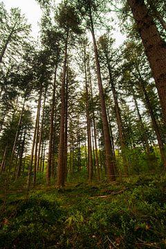 In het bos van Nynke Altenburg