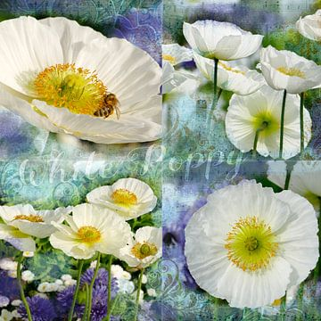 Weiße Mohnblüten van christine b-b müller
