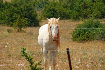 eenzame roze paard in de wei van wil spijker