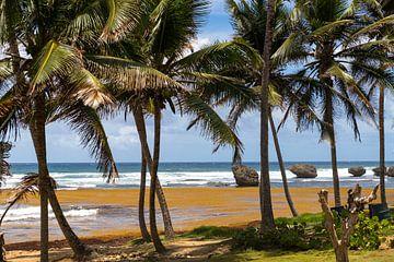 Westkust Barbados van Elly Damen