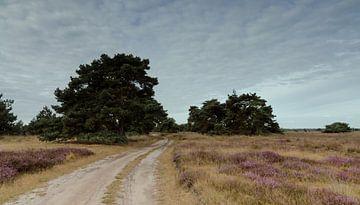 Strabrechtse Heide 125 van Deshamer