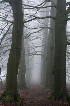 Mysteriöse Nebelspur von Thomas Jansen