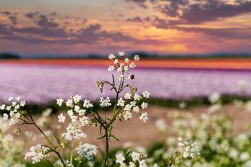 Kleurige Hollandse bloemvelden van Anouschka Hendriks