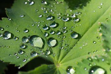Regentropfen auf Blättern von Marieke Funke