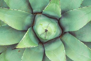 Grün wie eine Agave von Joris Pannemans - Loris Photography