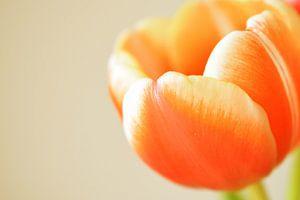 Oranje tulp van Manon Sloetjes