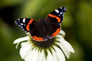 Butterfly on the top von Luchiena Heine