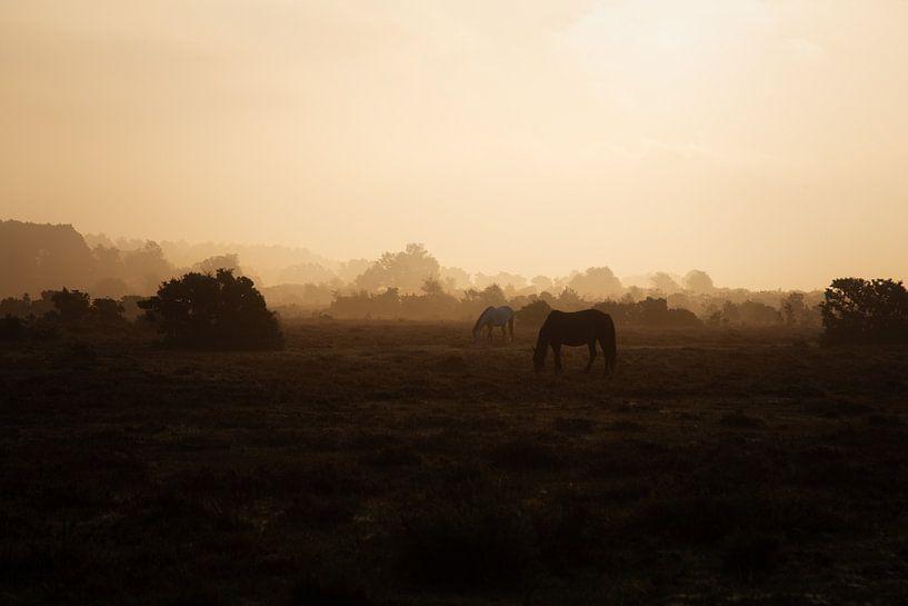 Paardjes in het gouden licht. van Anneke Hooijer