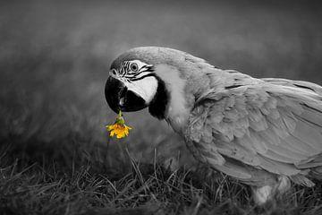 Papegaai is dol op paardenbloem van T de Smit