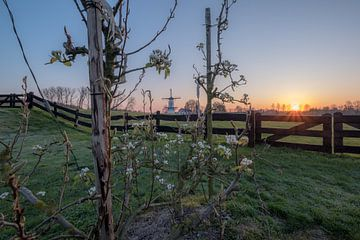 Fruitbomen bij molen De Vlinder van Moetwil en van Dijk - Fotografie