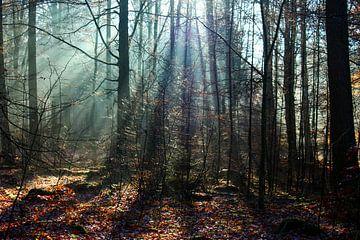 Licht door de bomen van Chris Smid