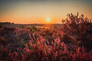 Zonsondergang op een veld vol heide van