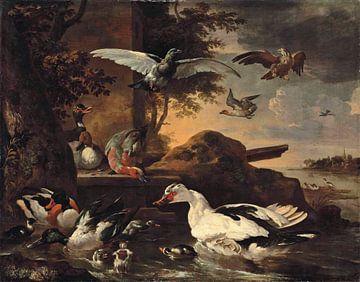 Een slobeend, een wilde eend, een wilde eend, een wilde eend, pochards en andere watervogels, Melchi van