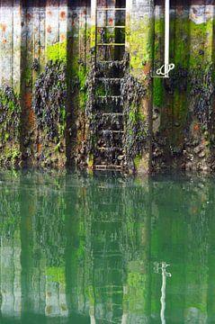 Algen en begroeiing op aan de waterkant in een haven van Nicolette Vermeulen
