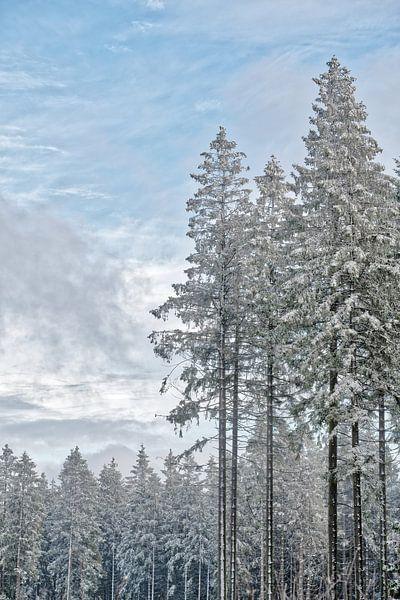 Winterwald von Rik Verslype