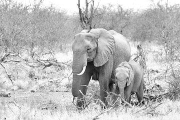 Elefanten in Schwarz und Weiß von Visueelconcept