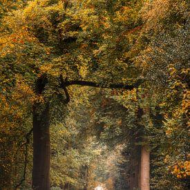 Een explosie van herfstkleuren in het Slochterbos. van Ton Drijfhamer