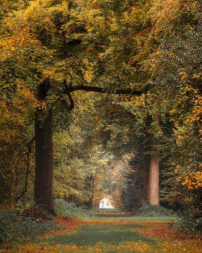 Een explosie van herfstkleuren in het Slochterbos. van