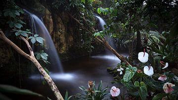 Malaysian Traum - Malay Traum Wasser Volants von R Smallenbroek