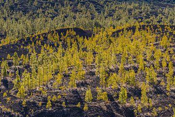 Teide Nationaal Park van Walter G. Allgöwer