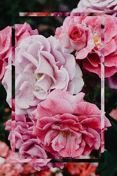 Natuur - Roze Roos van Mandy Jonen