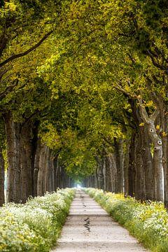 Spring Path van Lars van de Goor