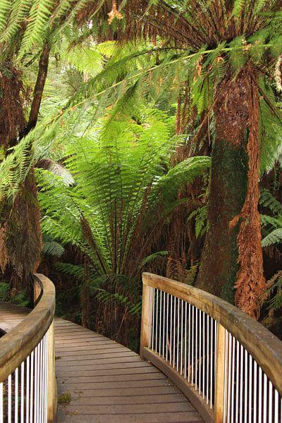 Mystery trail in the jungle, Australia van Inge Hogenbijl