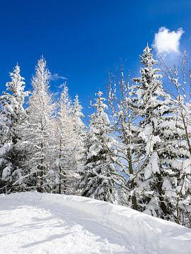 Arbres de neige sous un ciel bleu sur iPics Photography