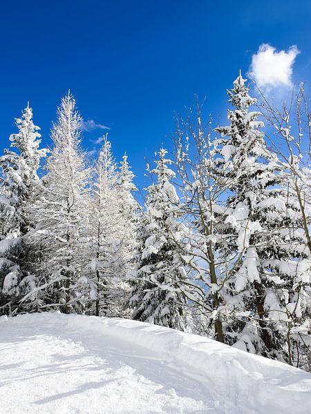 Besneeuwde bomen onder een blauwe hemel van iPics Photography