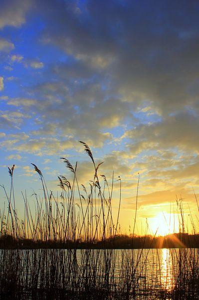 Am Teich von Ostsee Bilder